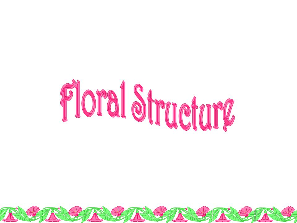 Floral Structure