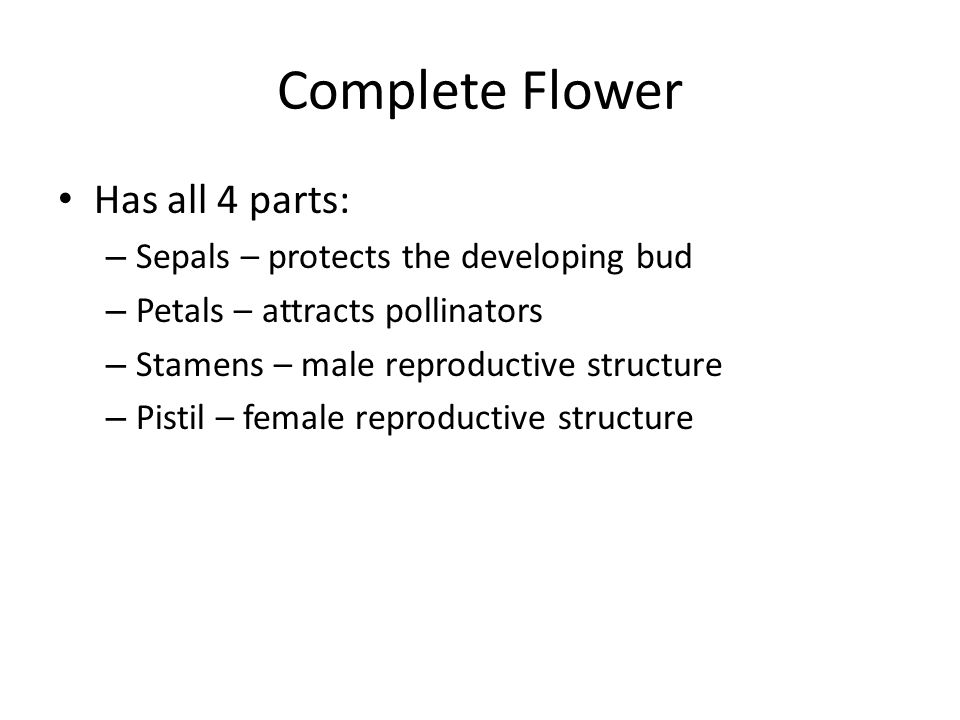Complete Flower Has all 4 parts: Sepals – protects the developing bud