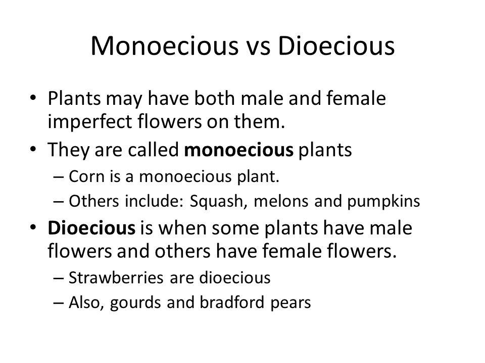 Monoecious vs Dioecious
