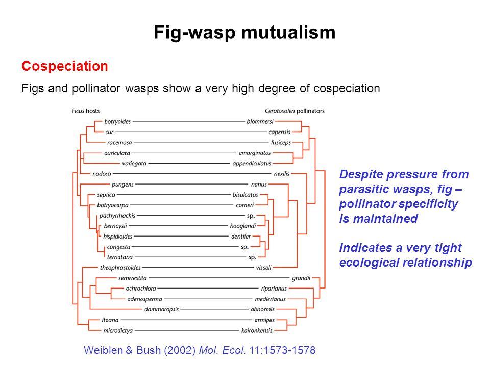 Fig-wasp mutualism Cospeciation
