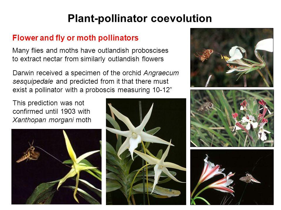 Plant-pollinator coevolution