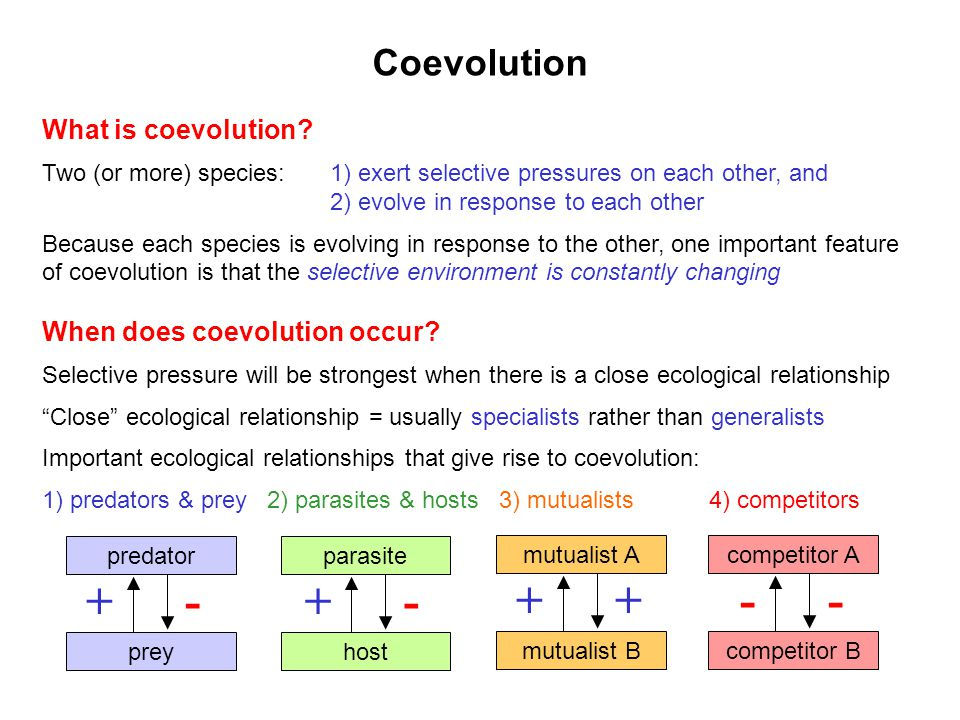 + - + + - - Coevolution What is coevolution