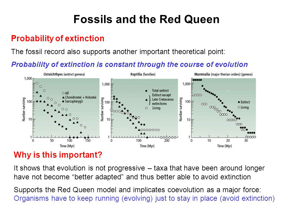 Fossils and the Red Queen