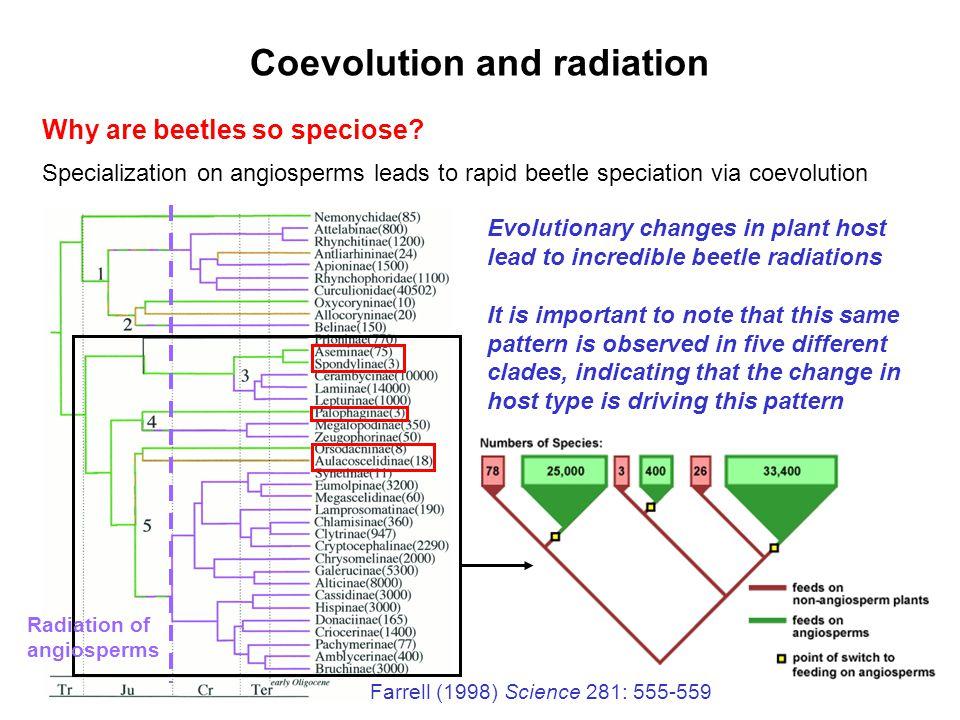 Coevolution and radiation
