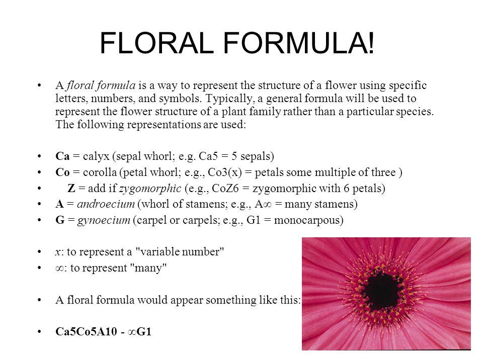 FLORAL FORMULA!