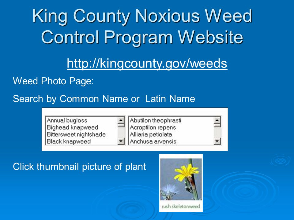 King County Noxious Weed Control Program Website