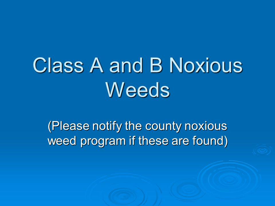 Class A and B Noxious Weeds