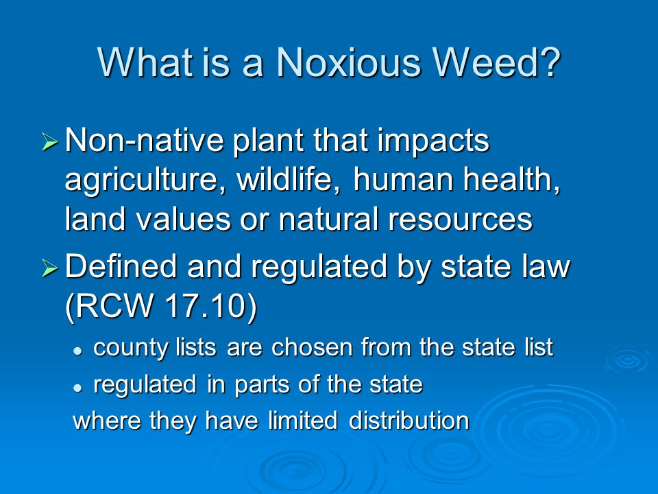 What is a Noxious Weed Non-native plant that impacts agriculture, wildlife, human health, land values or natural resources.