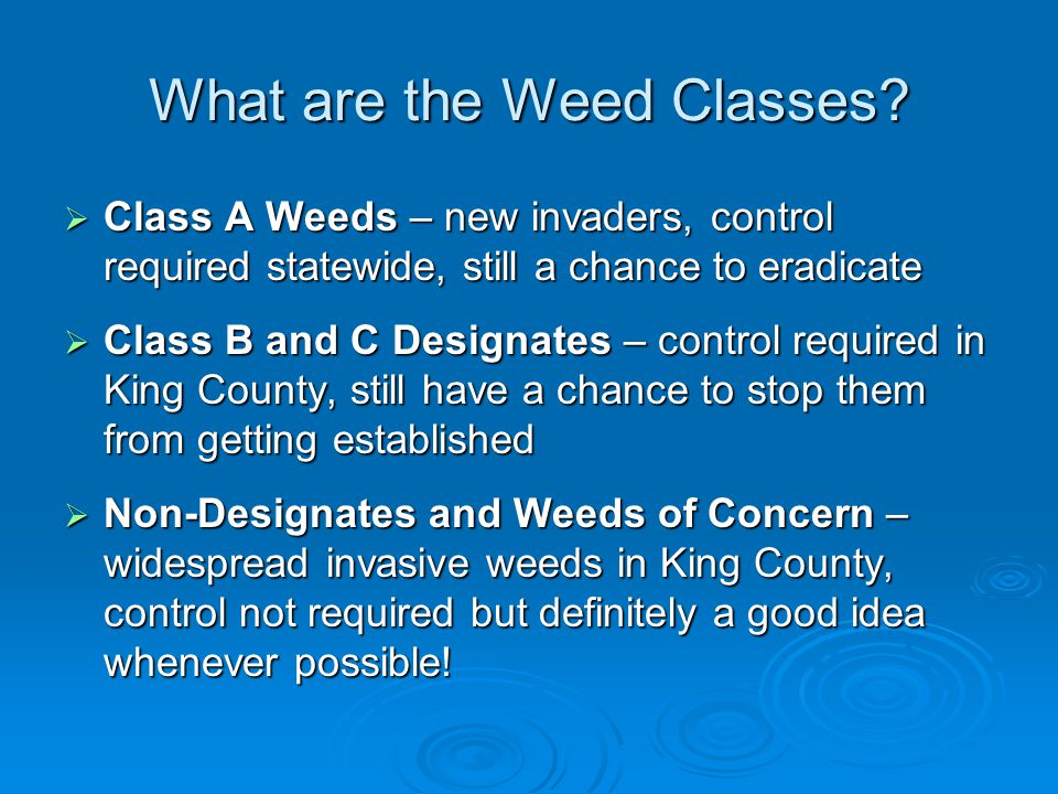 What are the Weed Classes