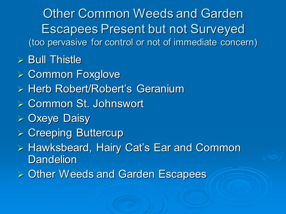 Other Common Weeds and Garden Escapees Present but not Surveyed (too pervasive for control or not of immediate concern)