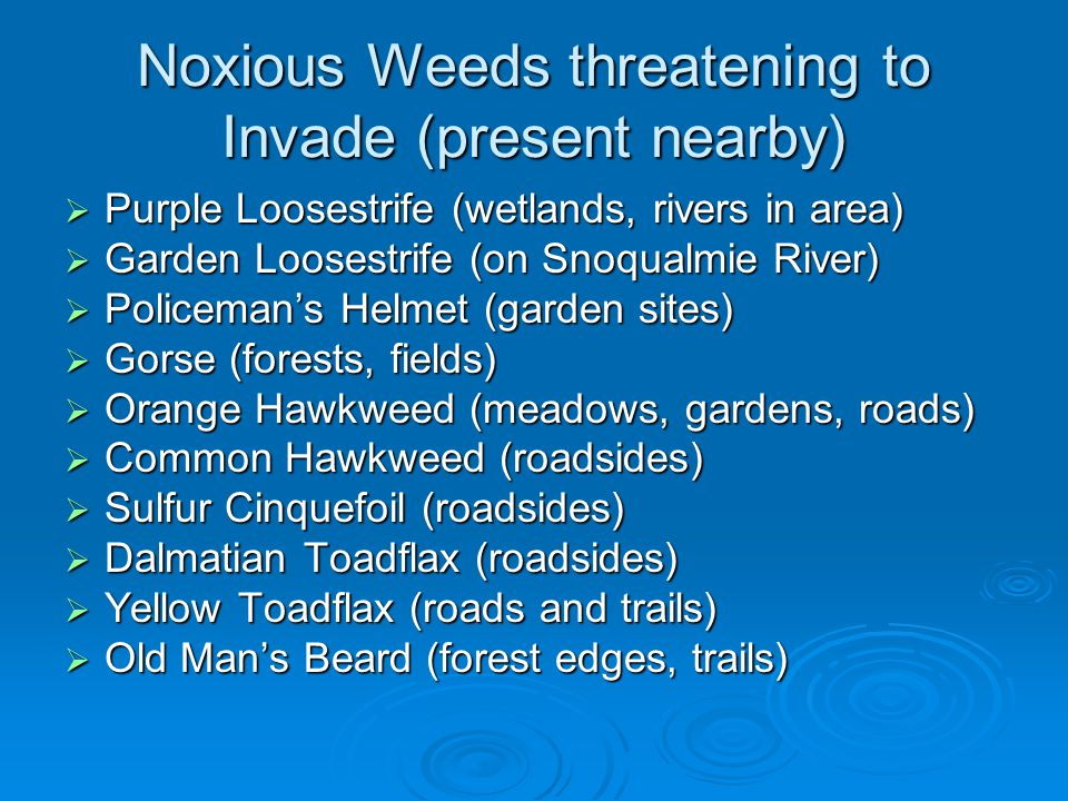 Noxious Weeds threatening to Invade (present nearby)