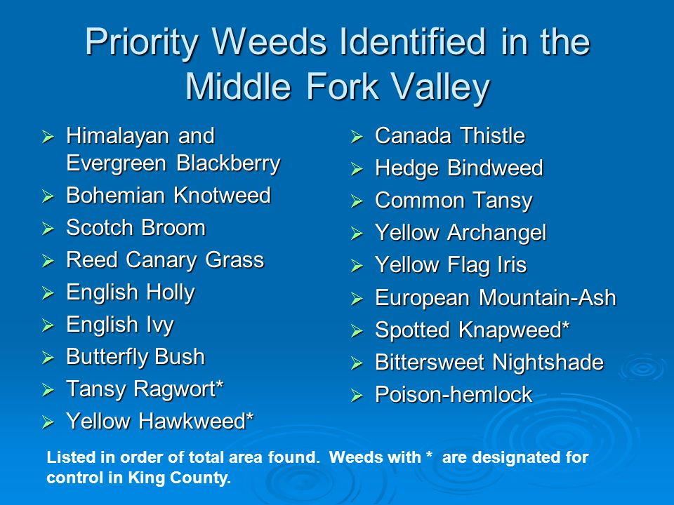 Priority Weeds Identified in the Middle Fork Valley