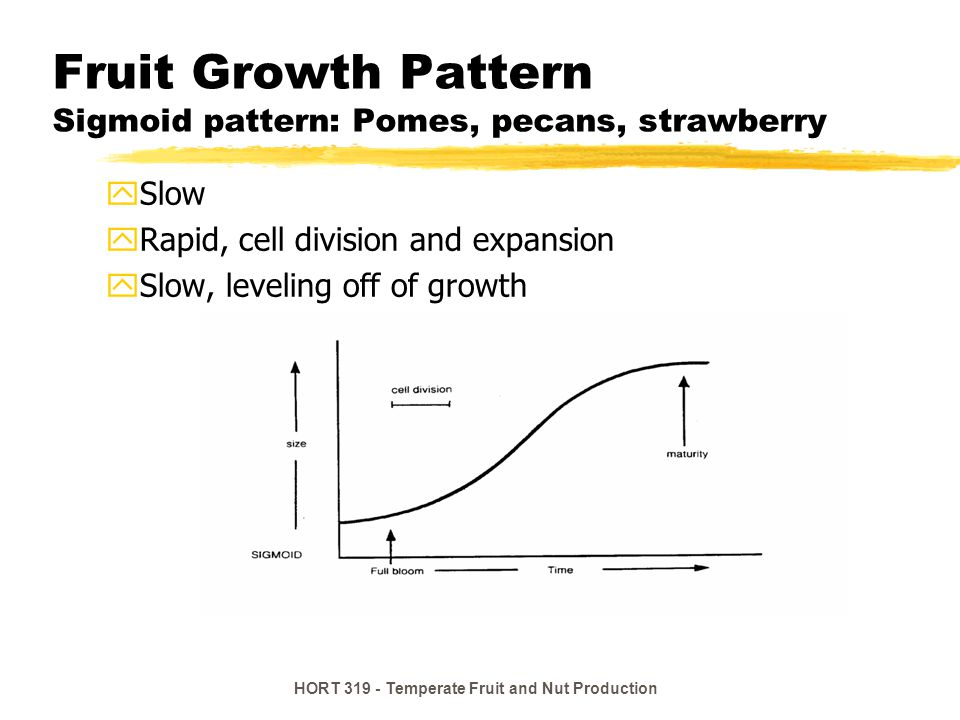 Fruit Growth Pattern Sigmoid pattern: Pomes, pecans, strawberry