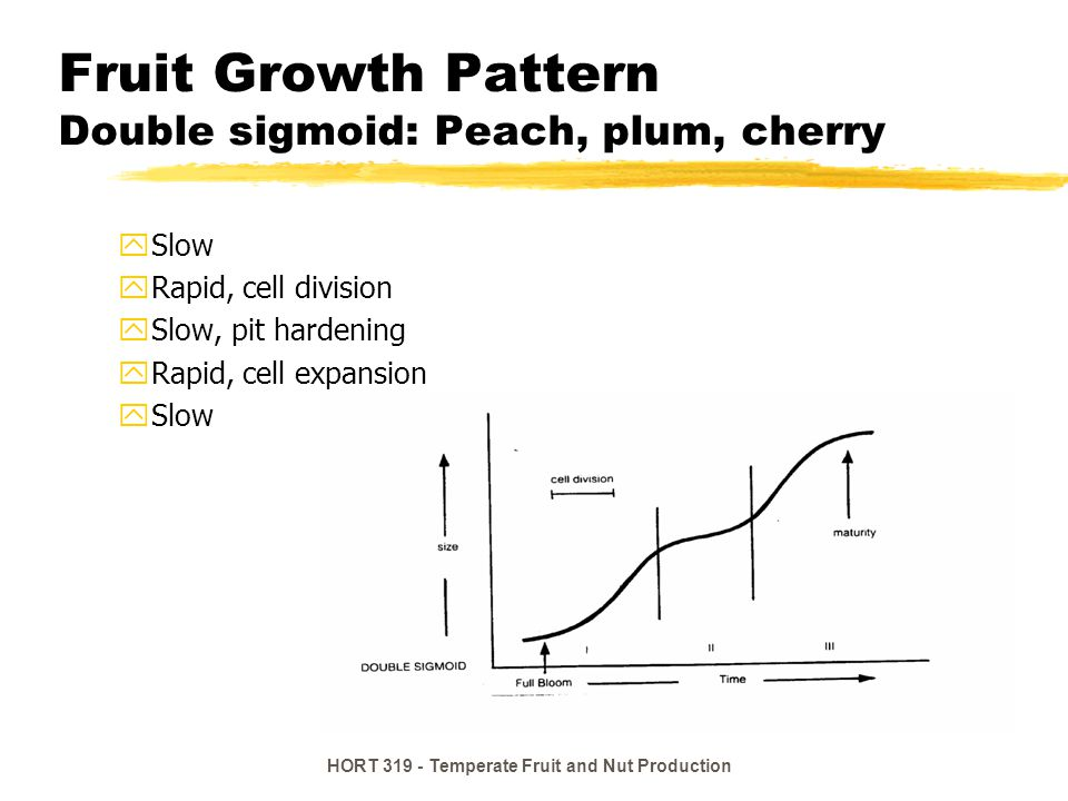 Fruit Growth Pattern Double sigmoid: Peach, plum, cherry
