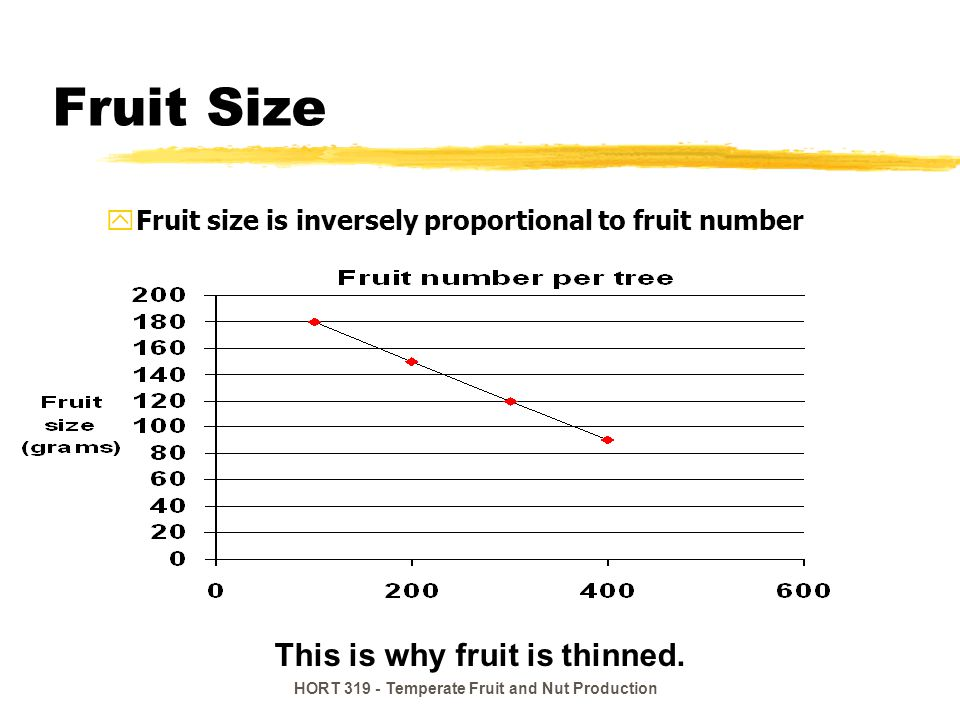 Fruit Size This is why fruit is thinned.