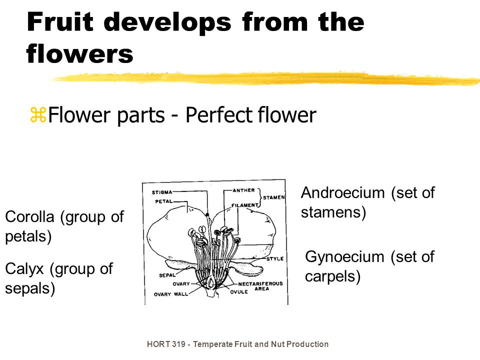 Fruit develops from the flowers