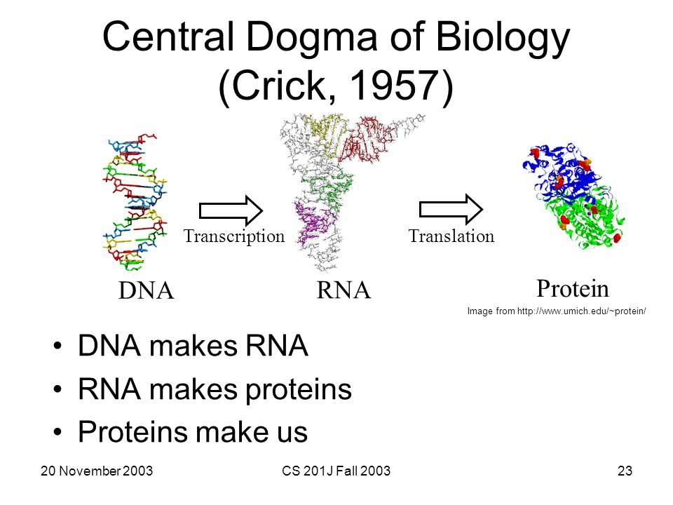 Central Dogma of Biology (Crick, 1957)