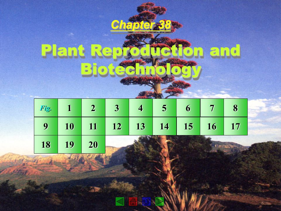 Plant Reproduction and Biotechnology