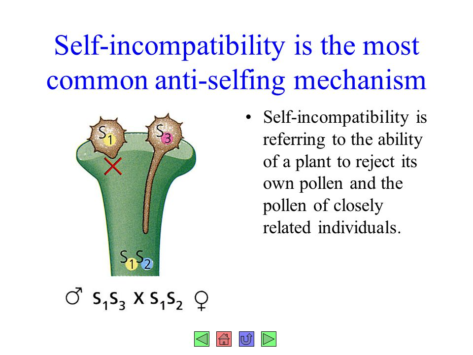 Self-incompatibility is the most common anti-selfing mechanism