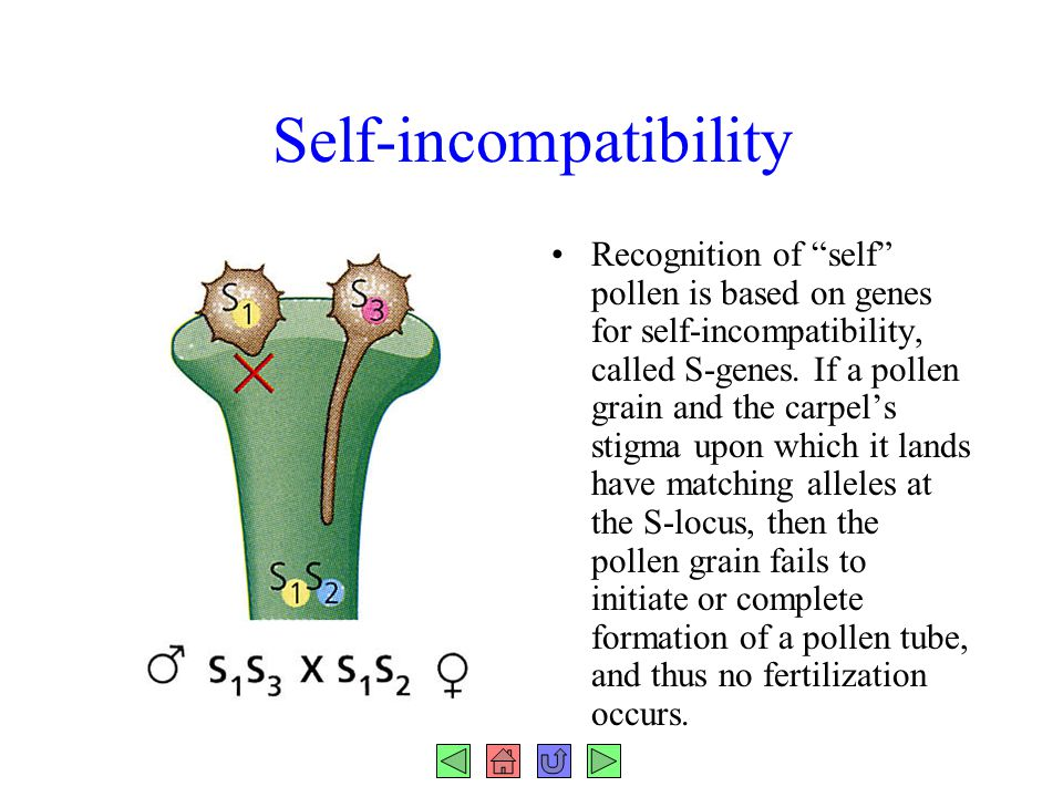 Self-incompatibility