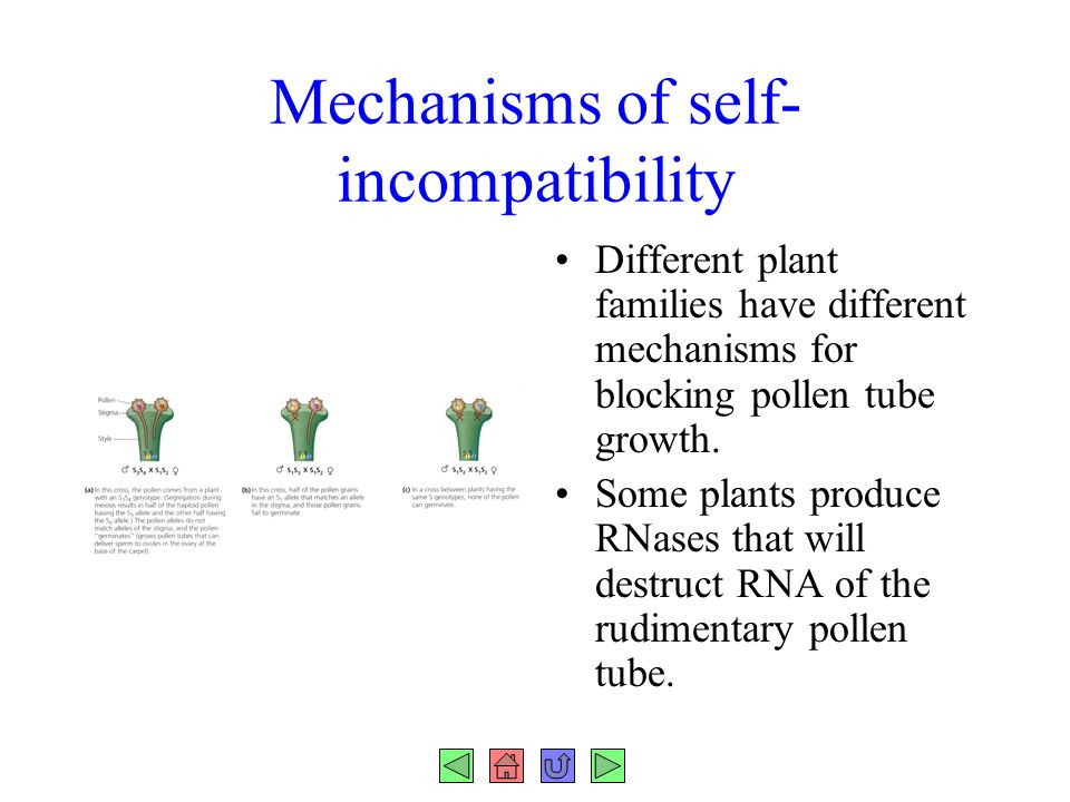 Mechanisms of self-incompatibility