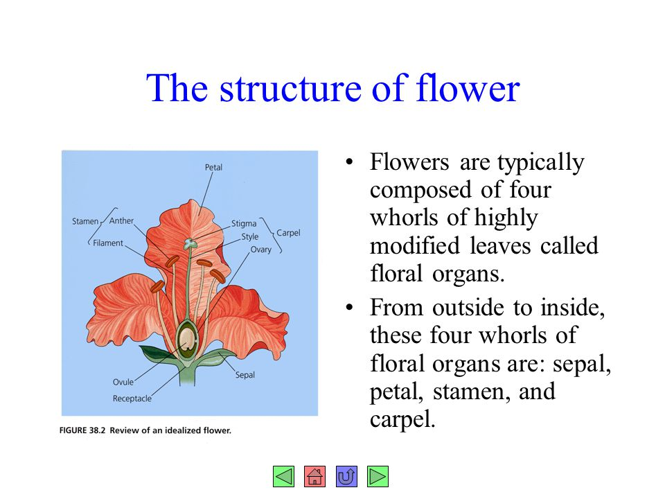 The structure of flower