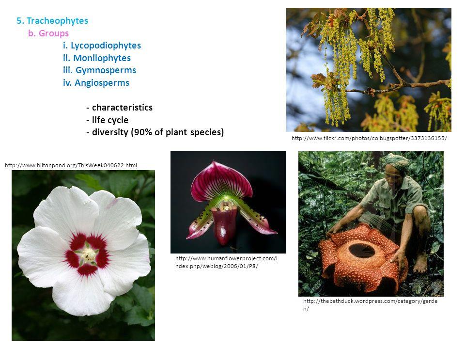 - diversity (90% of plant species)