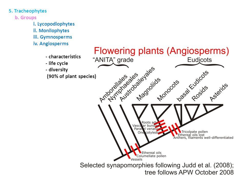 5. Tracheophytes b. Groups. i. Lycopodiophytes. ii. Monilophytes. iii. Gymnosperms. iv. Angiosperms.