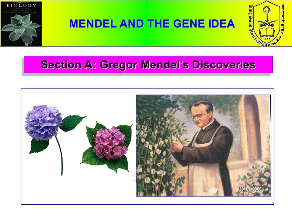 MENDEL AND THE GENE IDEA Section A: Gregor Mendel's Discoveries