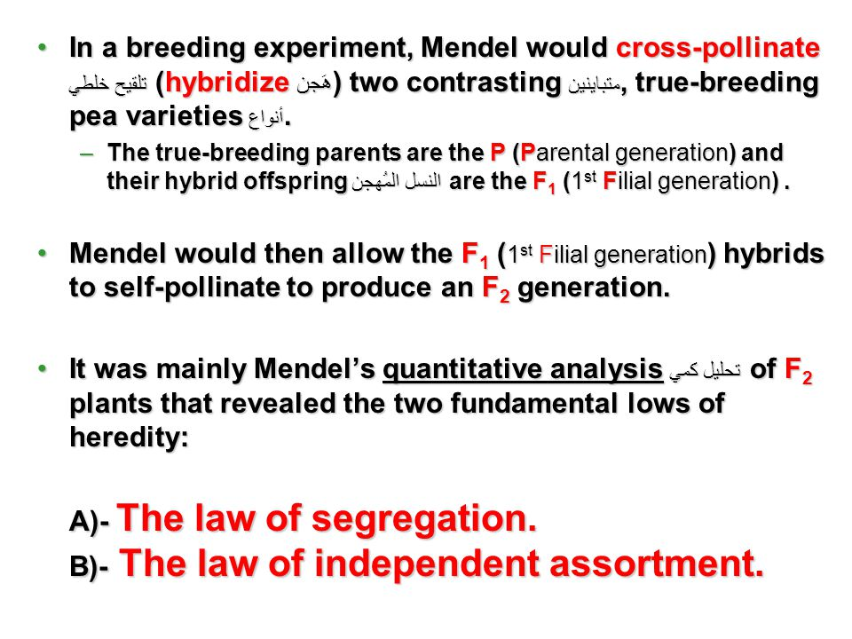 A)- The law of segregation. B)- The law of independent assortment.