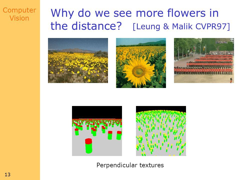 Why do we see more flowers in the distance