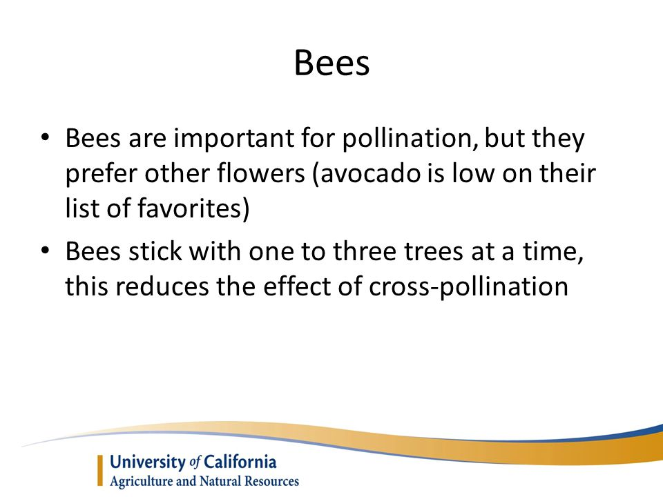 Bees Bees are important for pollination, but they prefer other flowers (avocado is low on their list of favorites)