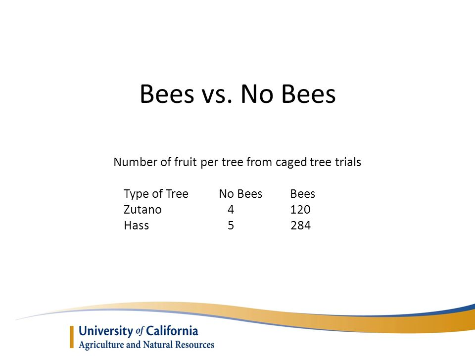 Number of fruit per tree from caged tree trials