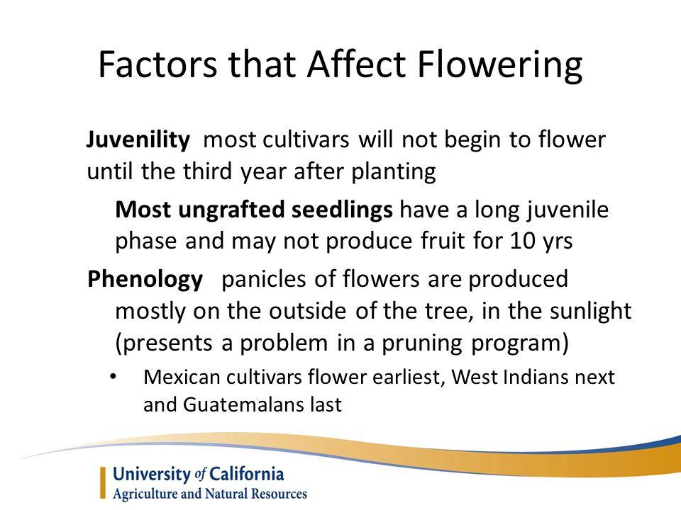 Factors that Affect Flowering