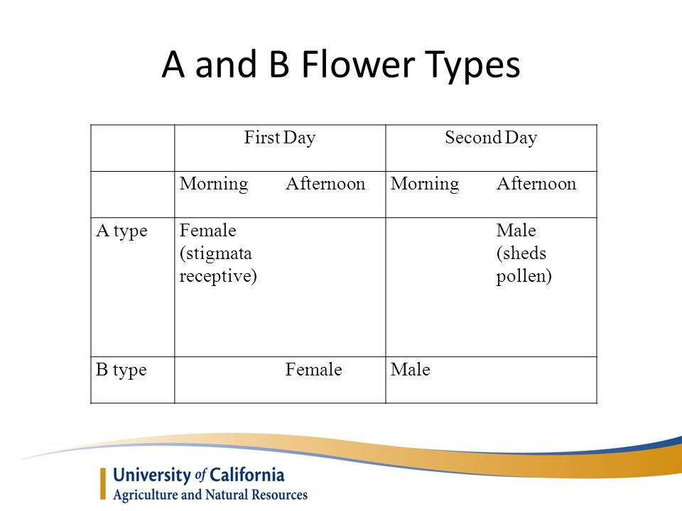 A and B Flower Types First Day Second Day Morning Afternoon A type