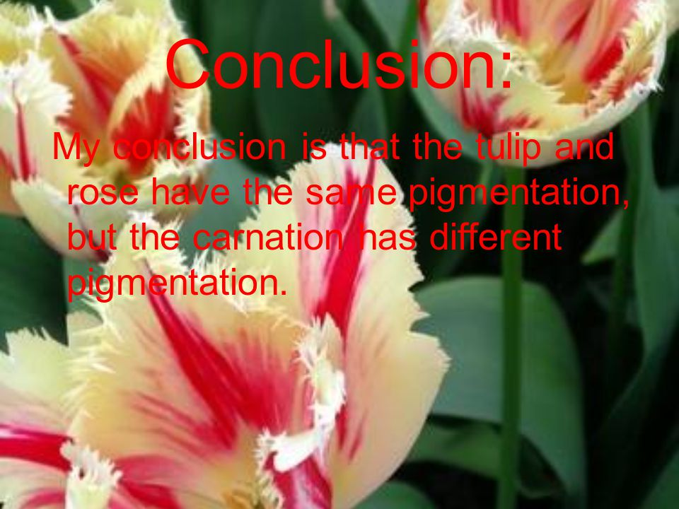 Conclusion: My conclusion is that the tulip and rose have the same pigmentation, but the carnation has different pigmentation.