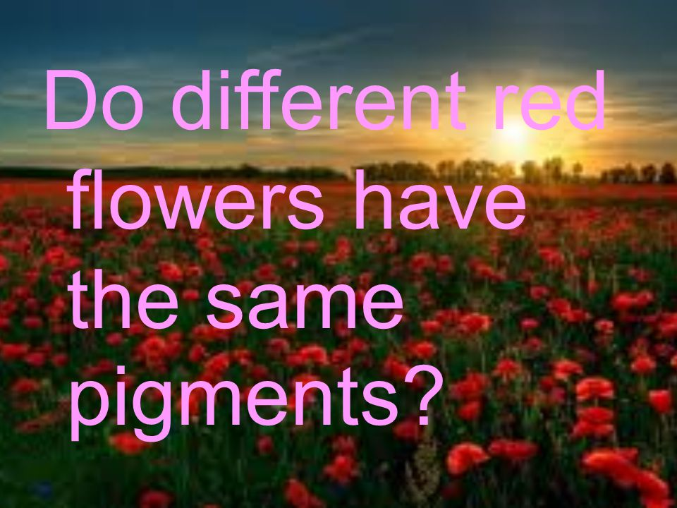 Do different red flowers have the same pigments