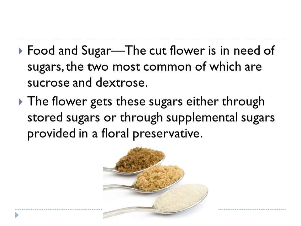 Food and Sugar—The cut flower is in need of sugars, the two most common of which are sucrose and dextrose.