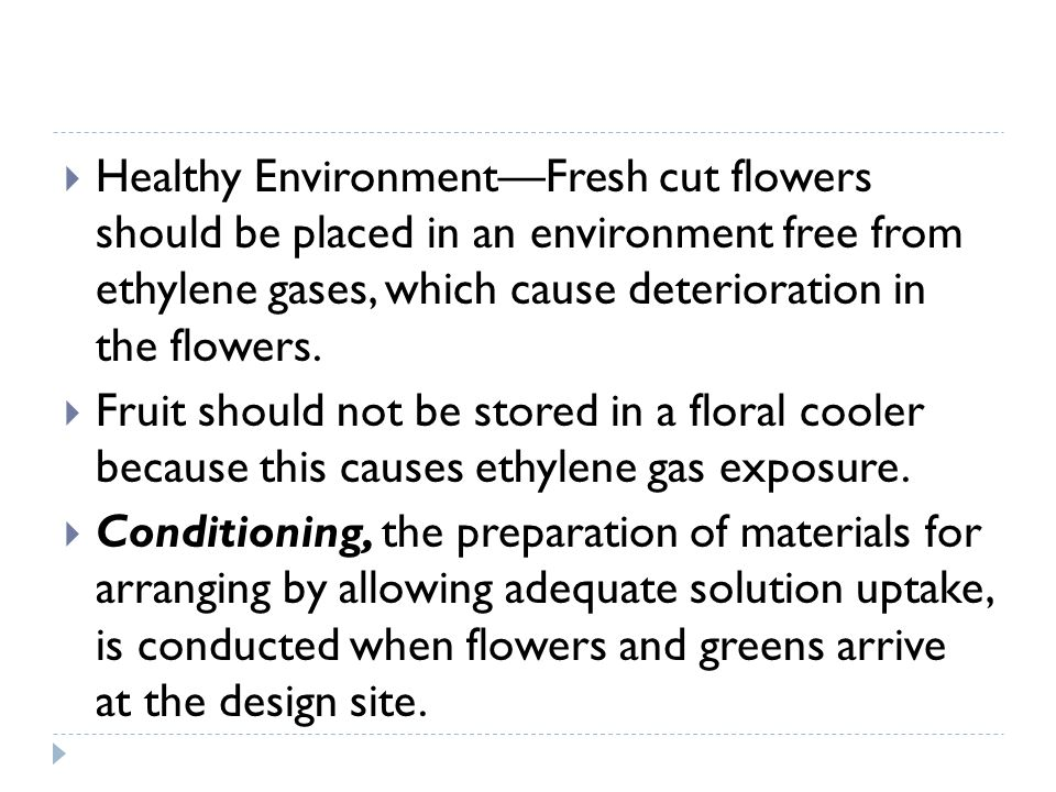 Healthy Environment—Fresh cut flowers should be placed in an environment free from ethylene gases, which cause deterioration in the flowers.