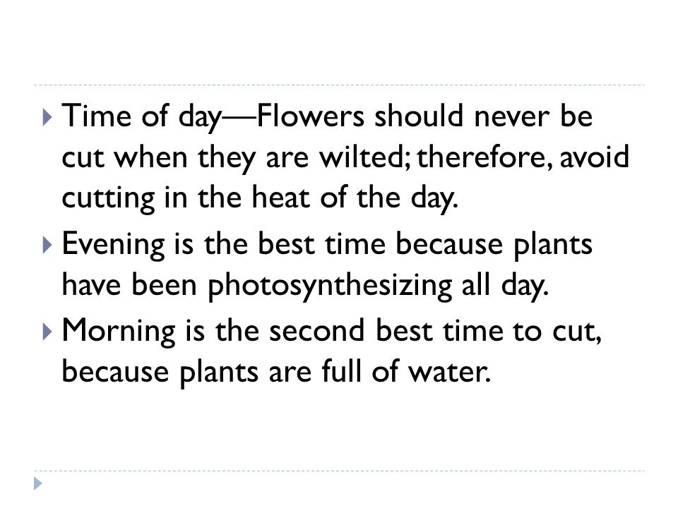 Time of day—Flowers should never be cut when they are wilted; therefore, avoid cutting in the heat of the day.