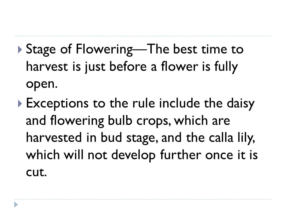 Stage of Flowering—The best time to harvest is just before a flower is fully open.