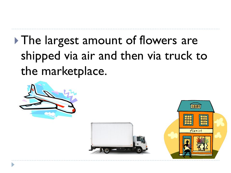 The largest amount of flowers are shipped via air and then via truck to the marketplace.