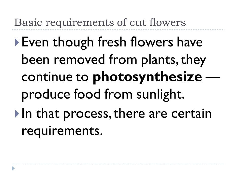 Basic requirements of cut flowers