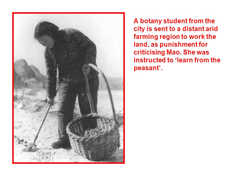 A botany student from the city is sent to a distant arid farming region to work the land, as punishment for criticising Mao.