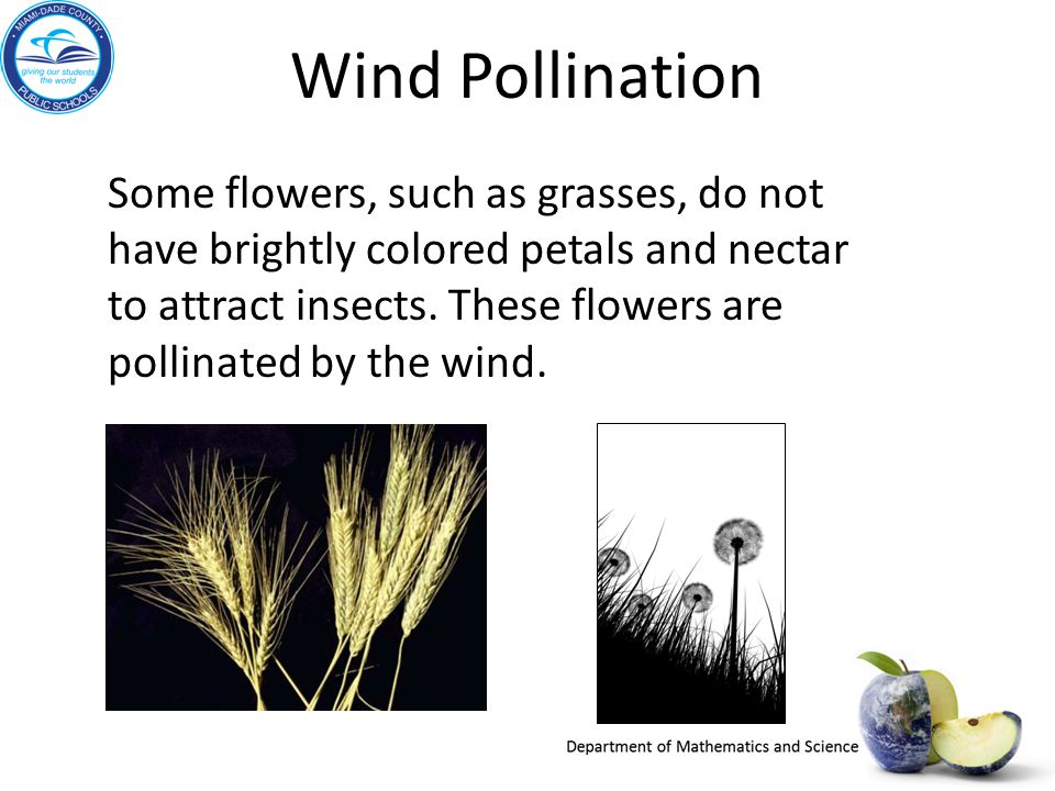 Wind Pollination