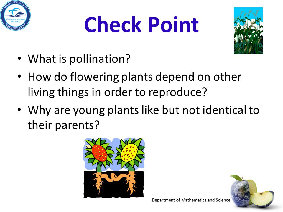 Check Point What is pollination