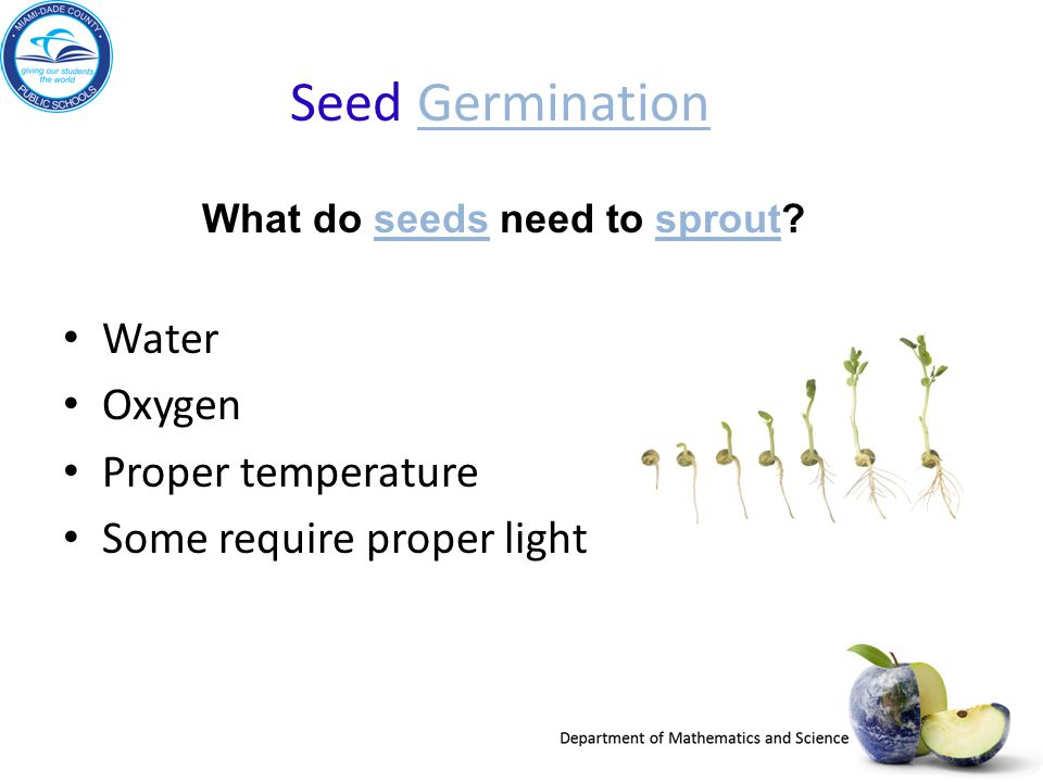 What do seeds need to sprout