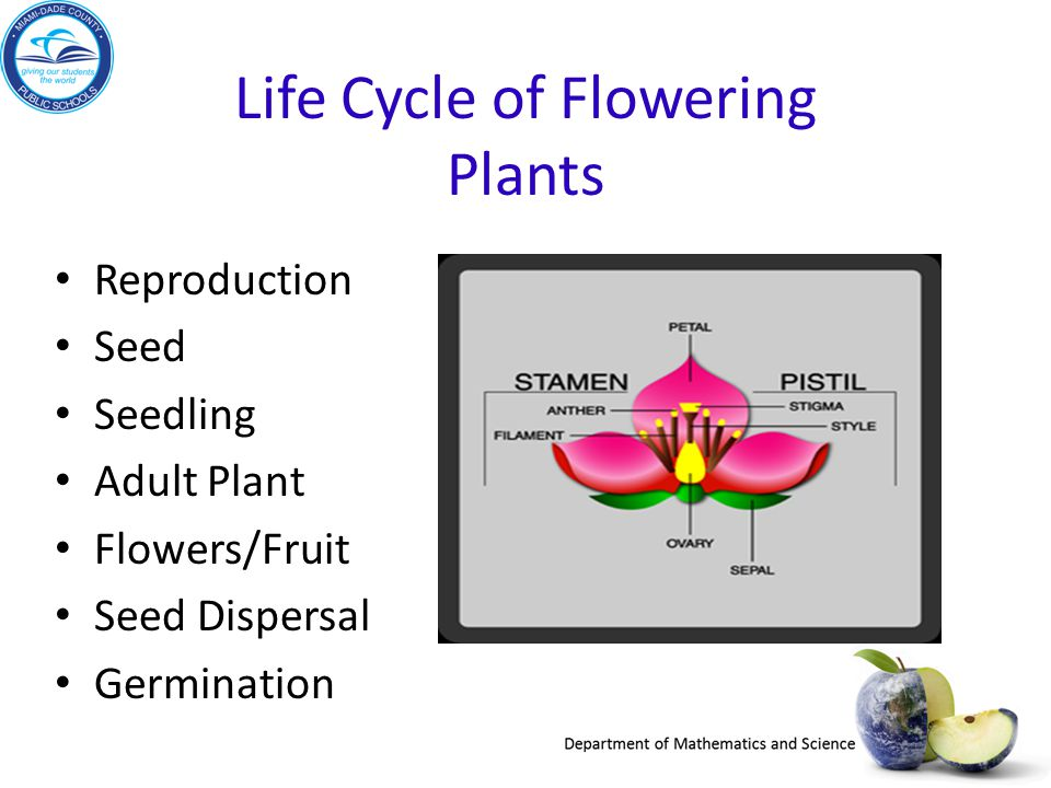 Life Cycle of Flowering Plants