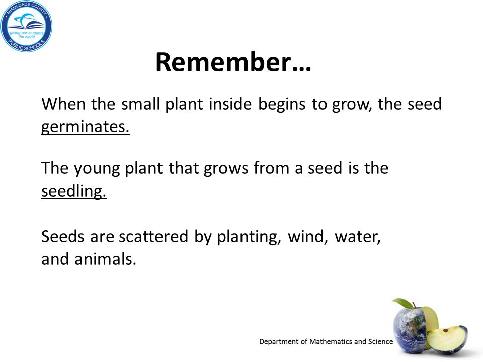 Remember… Seeds are scattered by planting, wind, water, and animals. When the small plant inside begins to grow, the seed germinates.
