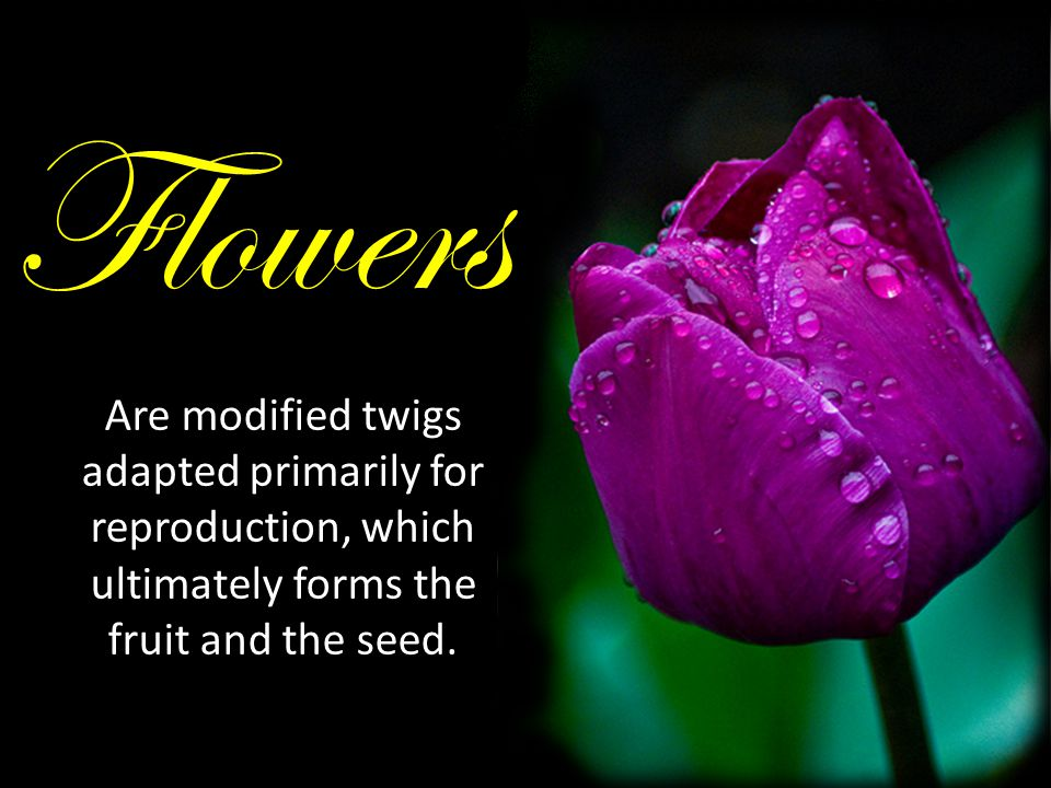 Flowers Are modified twigs adapted primarily for reproduction, which ultimately forms the fruit and the seed.